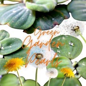 © TAUTROPFEN Naturkosmetik - wildwachsende Rohstoffe aus Fair Trade-Handel und geprüfte Hautverträglichkeit