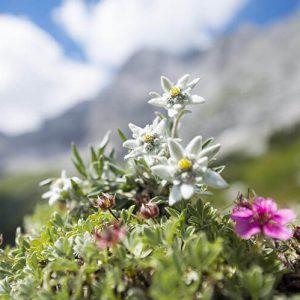 © FESCHE GRETL - handgemachte Naturkosmetik aus Schloss Puchenau