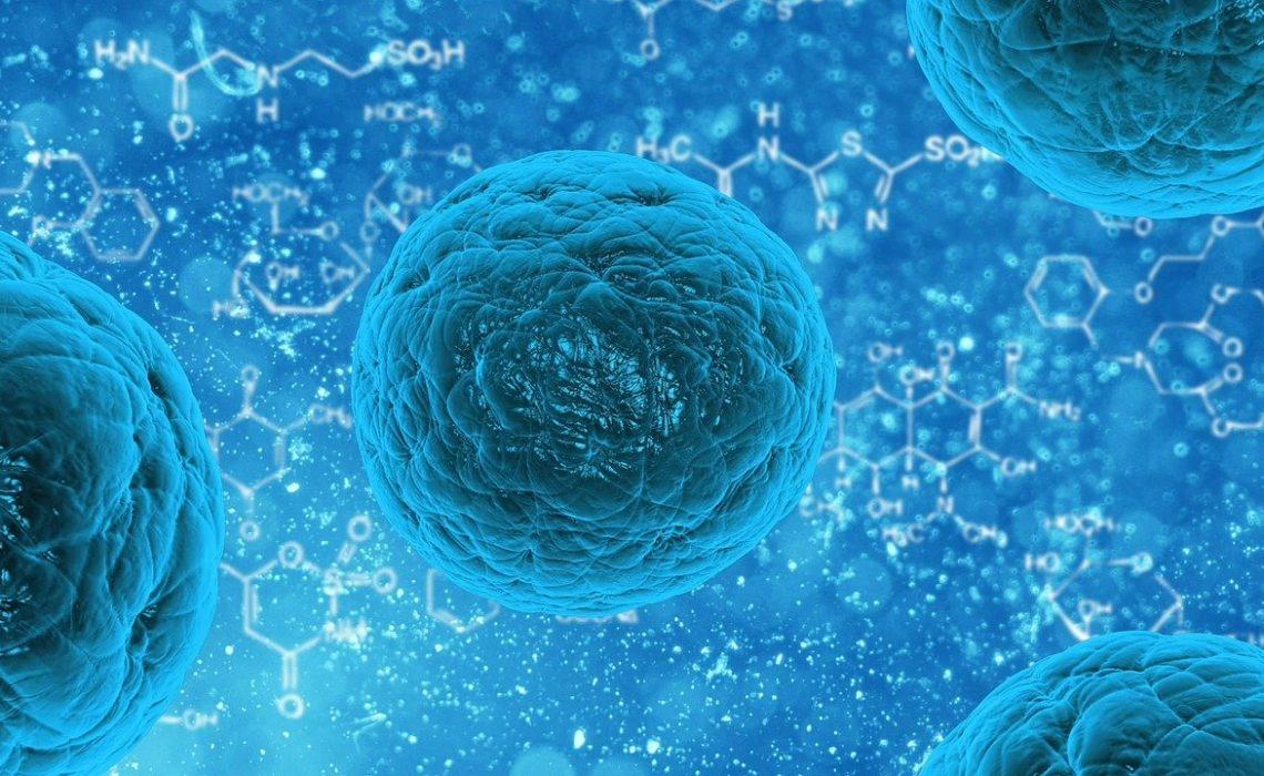 Infektionsforschung: Neue Erkenntnisse zur Chlamydien-Infektion